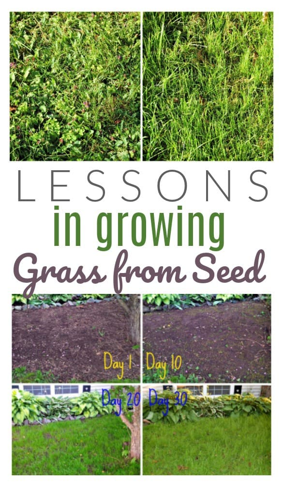 Growing A Lawn From Seed Mycoffeepot Org