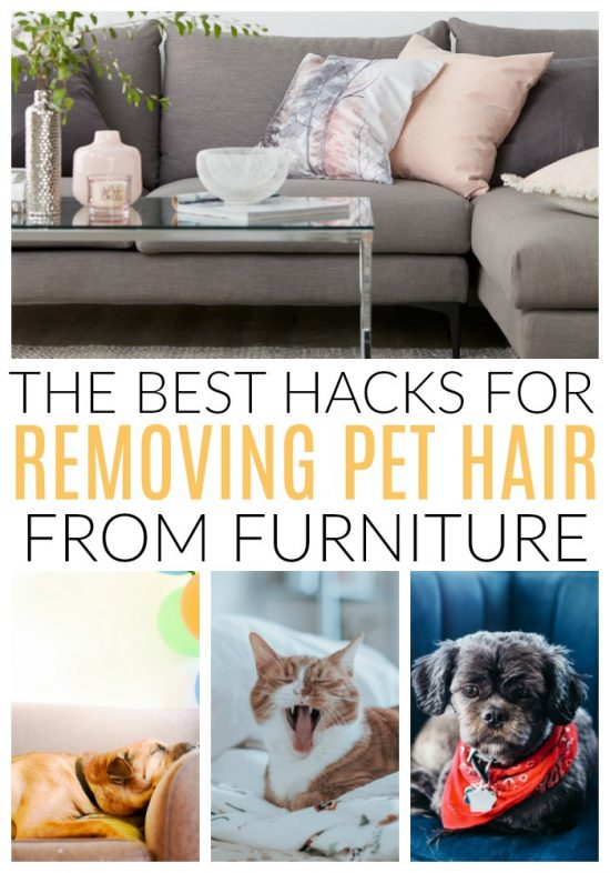 Dog Hair And Cat Off Main Surfaces Like Clothing Furniture Then We Can Get Into The More Specific Things How To Clean Car After A
