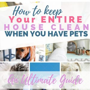 Clean your House with Pets